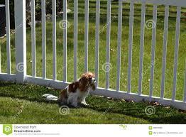 dog at picket fence stock photo image 69975980