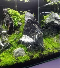 japanese aquascape evolución acurio 30l que podeis encontrar nuestra tienda de