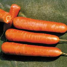 stage cuisine nantes organic nantes carrot seeds from park seed