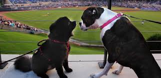 bark in the park durham bulls tickets