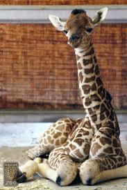 dallas zoo zooborns