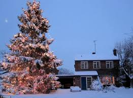 Small Decorated Christmas Trees Uk by Small Xmas Tree Planted 35 Years Ago At Family Home Is Now 51ft