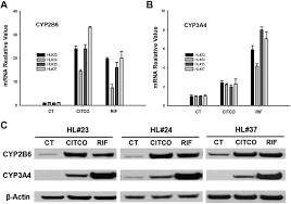 The Constitutive Androstane Receptor Is A Novel Therapeutic Target