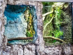green tree monitor lizard of detroit zoo album on imgur