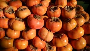 around the globe the persimmon travel off the eaten path