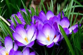 types of purple purple flowers types 6 desktop wallpaper hdflowerwallpaper com