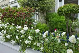 provide a nice exterior garden walls with vines hum ideas