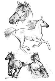 mustang horse drawing horse sketches by heidiarnhold on deviantart