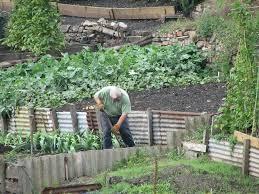 What Is Urban Gardening Polywesgardens Fort Worth Tx Eastside Community Garden