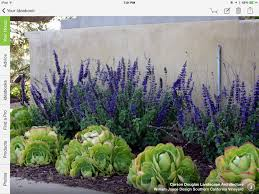 succulents and purple tall flowers succulent plants