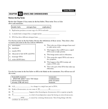 genes and chromosomes worksheet free worksheets library download