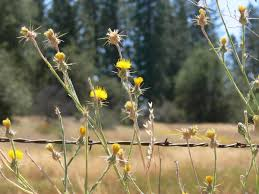 native plants in california plants become space invaders