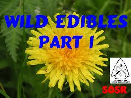 wild edible plants part 1 youtube