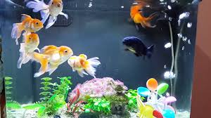 goldfish tank design cool must see youtube