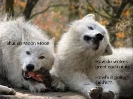 Moon Moon Memes - ah the best memes ever created moon moon meme dump album on imgur
