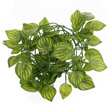 Vine House Plants Compare Prices On Indoor Vines Online Shopping Buy Low Price