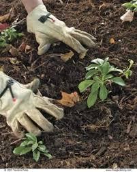 planting a tree gardening