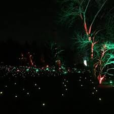 tree lights at the morton arboretum illumination tree lights at the morton arboretum 11 photos