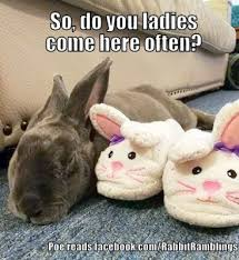 Cute Easter Meme - rabbit ramblings funny bunny memes