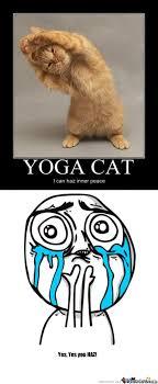 Drunk Yoga Meme - yoga cat by karhadkarameya meme center