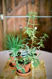 Potted Plants Wedding Centerpieces by Center Piece Idea Except The Larger Plant Would Be Cut Flowers