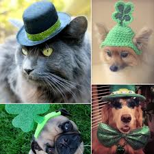 st patrick u0027s day and pets popsugar pets