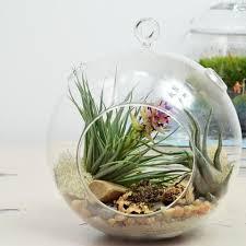 air plant terrariums u2013 ps terrariums