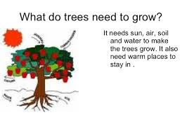explain the cycle of a tree