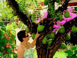 Tropische Pflanzen Im Garten Die Villen Und Apartments Liegen Mit Ihrer Exotischen Pflanzen