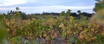 chambre agri 31 plan de lutte contre les dépérissements du vignoble chambres d