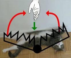 Cat Trap Meme - dopl3r com memes cat laying on his back it s a trap