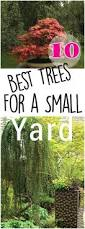 backyards compact 10 best trees for small yards making diy fun