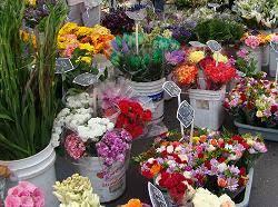 san diego flowers farmers market