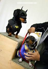 Halloween Costumes Wiener Dogs 20 Batman Dog Costume Ideas Bat Dog