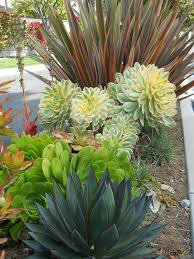 Drought Friendly Landscaping by Best 25 Xeriscaping Ideas On Pinterest Desert Landscaping