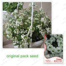Fragrant Potted Plants - popular outdoor pot balls buy cheap outdoor pot balls lots from