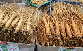 how to forage your own ginseng one green planet