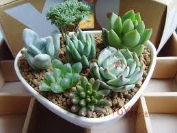 Face Planter Cute Plants Succulent Planter Terracotta Pot Cute Face Planter