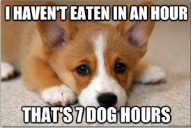 Dog Food Meme - top 20 first world dog problems
