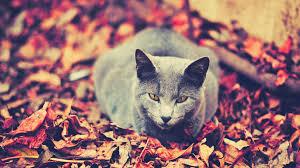 1920x1080 fall wallpaper download wallpaper 1920x1080 cat leaves sit dark autumn full