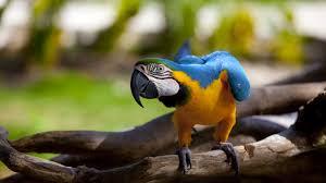 download wallpaper blue bird color bird tree stump sitting