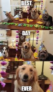 Best Day Ever Meme - best day ever funny pictures lol tribe