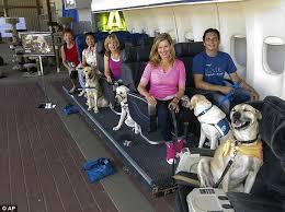 Comfort Dogs Certification Service Dog Certifications Information Service Dog Certifications