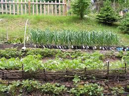 wshg net blog terracing a vegetable garden featured gardeners