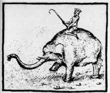 hanno elephant wikipedia