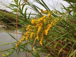 iowa native plant society native plants texasbutterflyranch