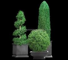 Topiaries Brisbane - topiaries outdoor home decorating interior design bath