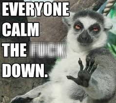 Lemur Meme - stoner lemur has a message for everyone bvimusic com the source
