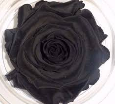 real black roses real preserved black roses last a year wholesale forever flower