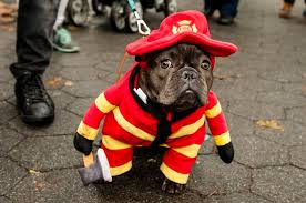 Halloween Dog Costume Tompkins Square Halloween Dog Parade U2013 Halloween Dog